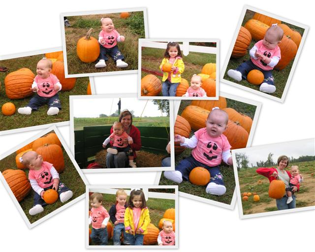 pumpkinpatch2 (Small).jpg